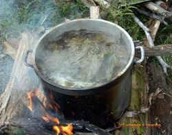 ayahuasca-caapi-brew.jpg