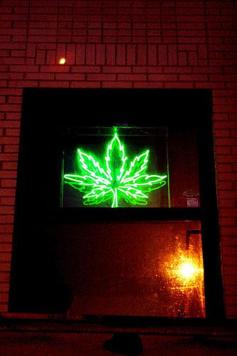 leaf-neon.jpg