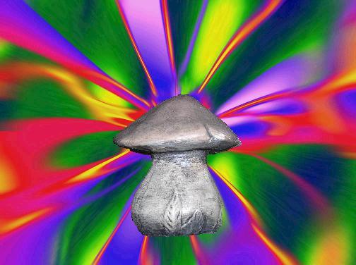 shroom-meds.jpg